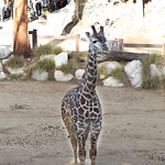LA Zoo Winter 2018 -288