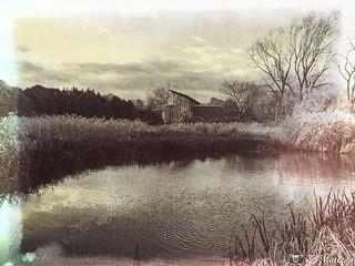 181107-33 Jardin botanique de Montréal