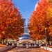 Autumn, the season that teaches us that change can be Beautiful! Chicago. Millennium Park, Bean by Natasha J Photography