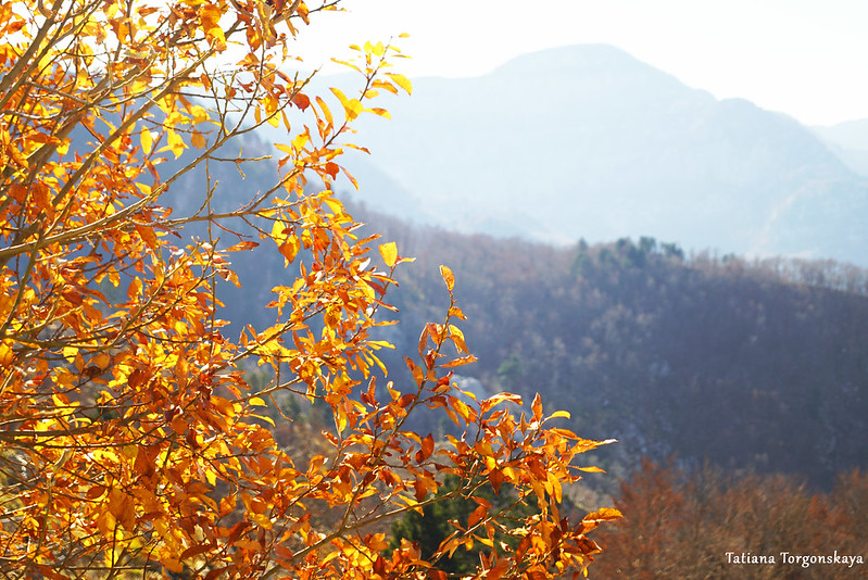 Дерево с осенней листвой