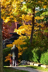 Elderly Man Walking On Beechknoll Road In The Fall