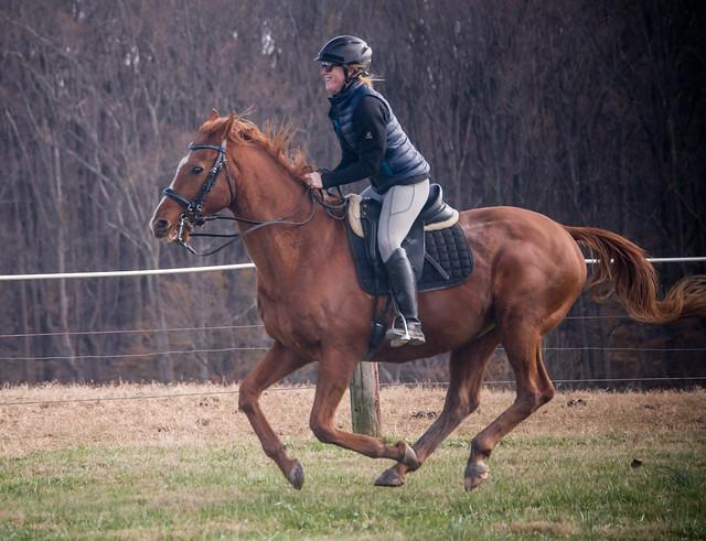 20181116 Austen's Ponies_39