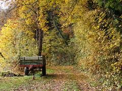 JZ Herbst Schwarzwald