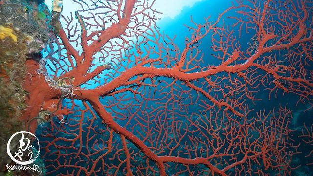 深場は美しい珊瑚が沢山♪