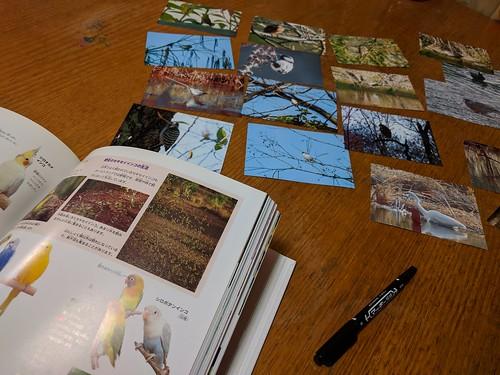 野鳥観察から帰ってきて図鑑で調べた