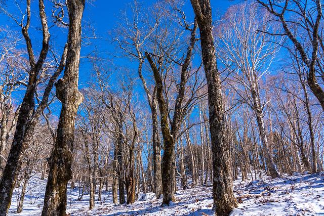 美しい樹林帯