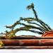 A Bit of the Cactus Garden (1) por Carl Campbell