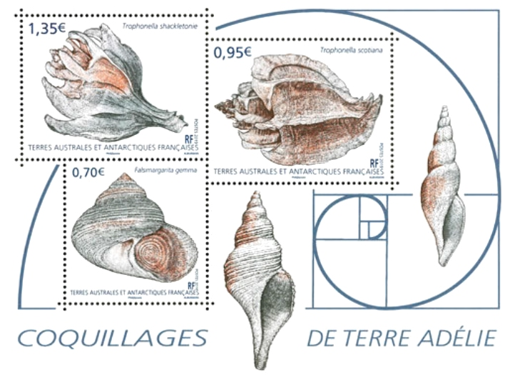 French Southern and Antarctic Lands - Seashells (January 2, 2019)