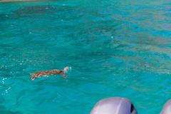 Na Pali boat tour turtle Kauai, Hawaii