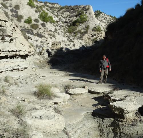 Megasismitas en depósitos lacustres - Rambla de los Pilares, Castilléjar (Granada, España) - 08