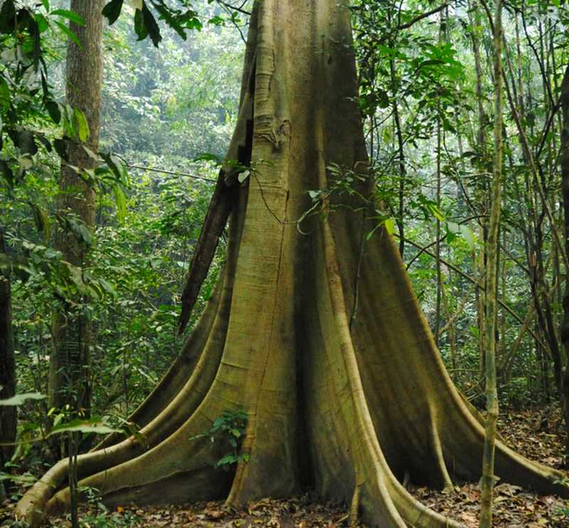 forêts-puits-de-carbone
