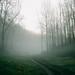 fog walkers by Daniel James Edwards