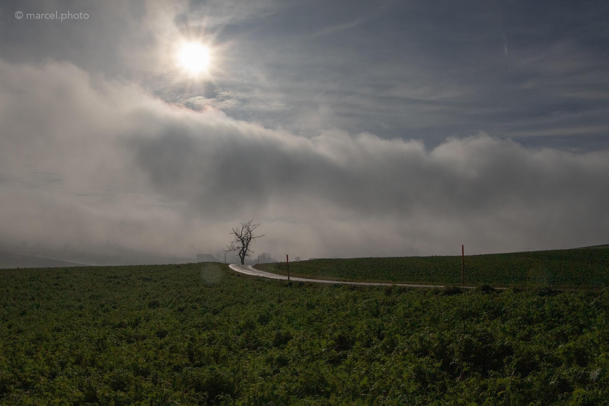 Einsamer Baum am Ende des Weges