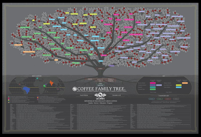 Coffee Family Tree CaffeImport