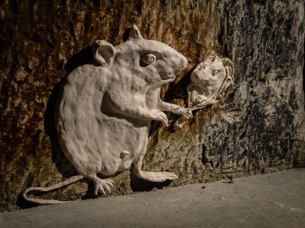 Les rats de chez Pomery... 46800130822_dbdfc9a1bb_b