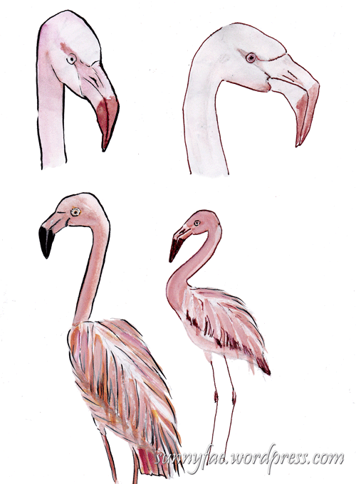 pink flamingo ink sketches