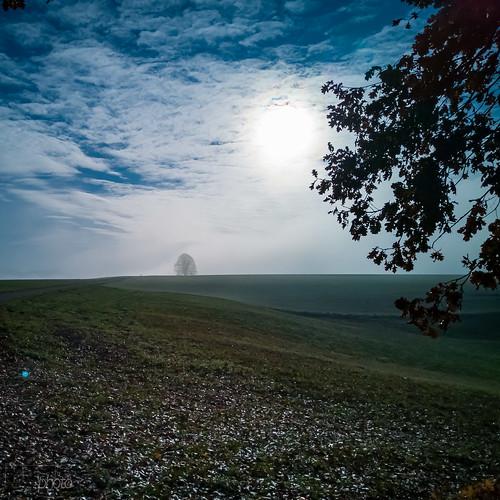 181125_Herbst_Nebel(12)
