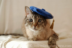 Miaolings in hats