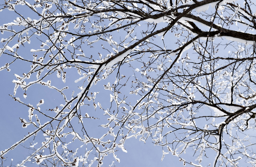 Winter Sky Branches