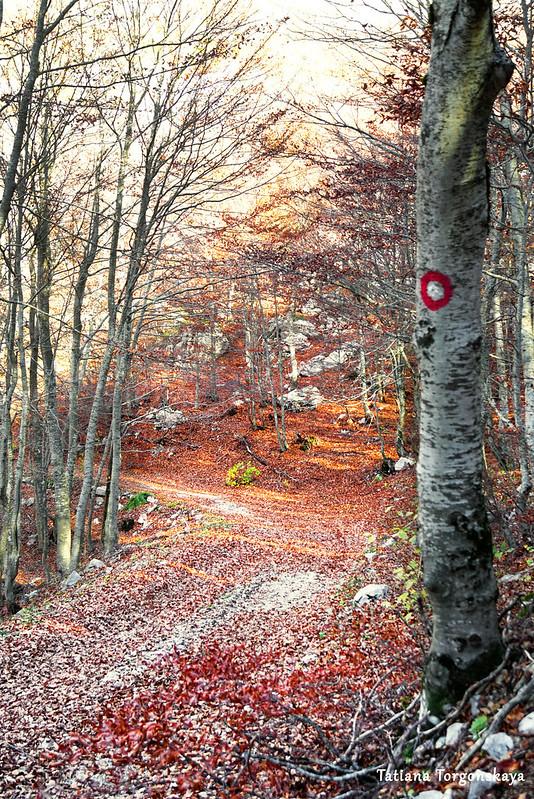 Дорога в буковом лесу