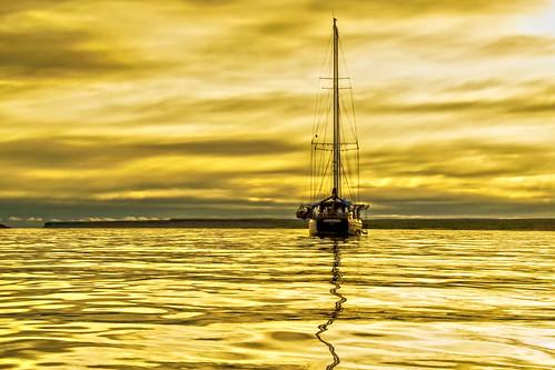 A Sea of Liquid Gold!
