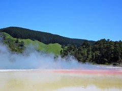 Rotorua. The sulphur coloured edge of  Champagne Lake in the geothermal volcanic park of Wai O Tapu. Boiling steam rises from the lake.