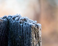 Frosty cedar boards
