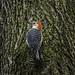 Tree Hugger by Portraying Life, LLC