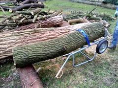 De eerste horde genomen, de stam vanaf de stapel op het karretje gekregen!