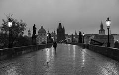 Rainy Morning on Charles Bridge