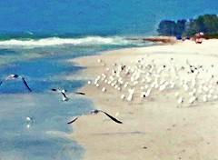 Sea Gull Coast