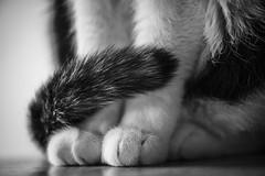 Le chat...