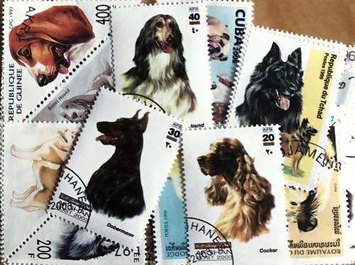 Známky psy balíček 50 ks rôznych