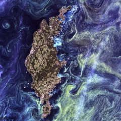 Massive congregations of greenish phytoplankton swirl in the dark water around Gotland, a Swedish island in the Baltic Sea. Original from NASA. Digitally enhanced by rawpixel.