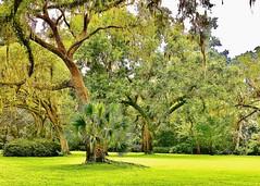 The Beauty of Northwest Florida