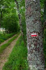 Petit sentier de sous-bois en Comminges - Photo of Cazeneuve-Montaut