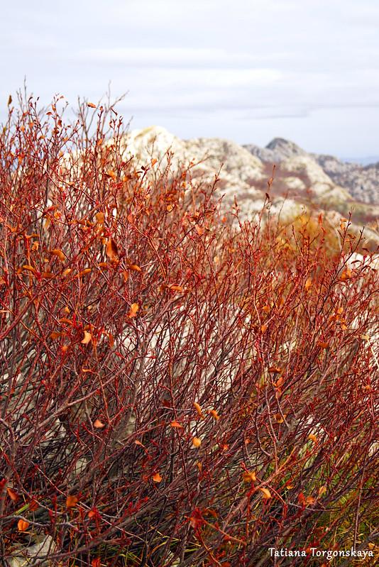 Красный куст на фоне гор