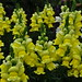Les fleurs de l'abbaye de Maria Laach, Glees, arrondissement d'Ahrweiler, Rhénanie-Palatinat, Allemagne.