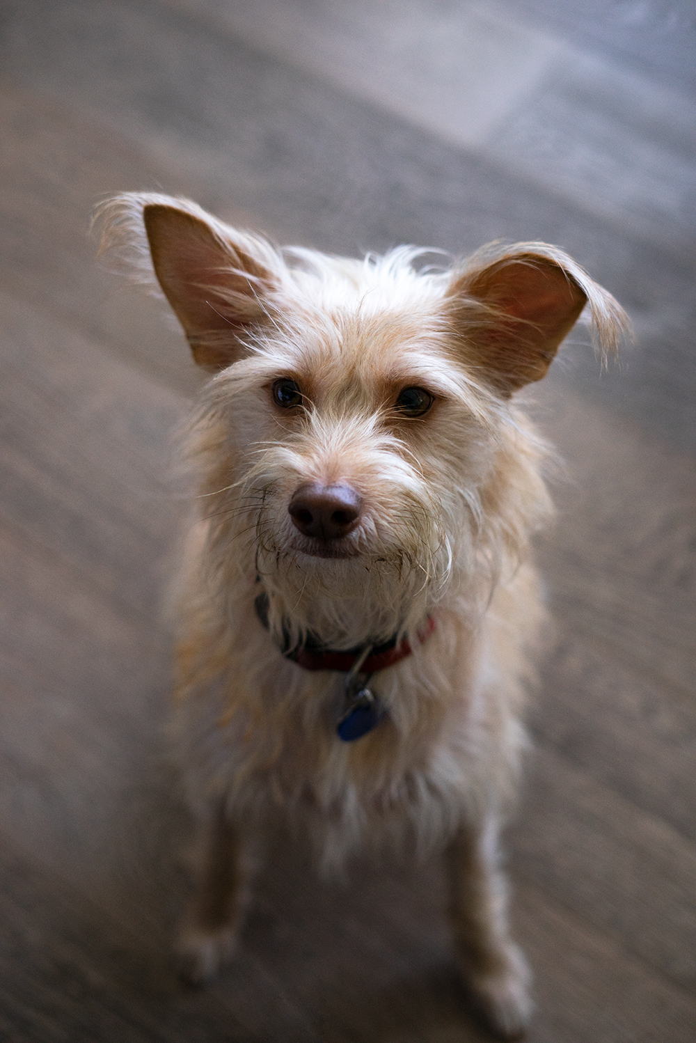 13goodland-santabarbara-hotel-travel-dog-terrier