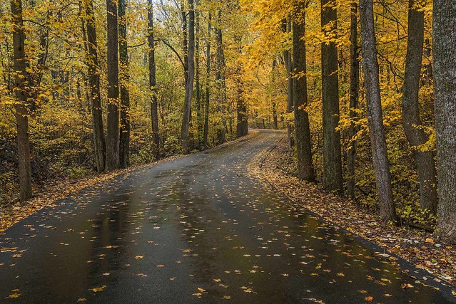 A road thru Clifty