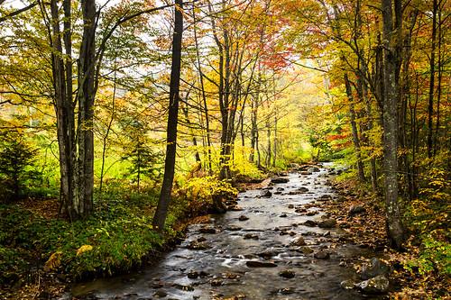 hamiltonfalls vermont newengland fallfoliage autumn yellow waterfall cobbbrook jamaica vt hike river creek falls hamilton