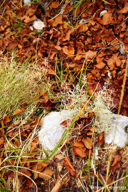 Буковые листья на тропе