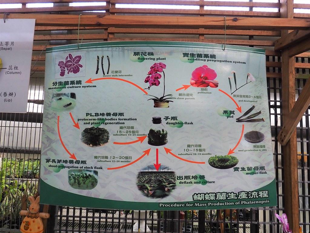 山上蘭科植物園 (22)