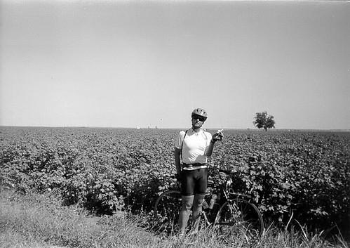 Cotton (2)