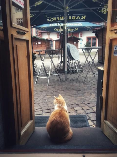 Le Chat de la Gouttière