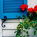Blue shutter with geraniums