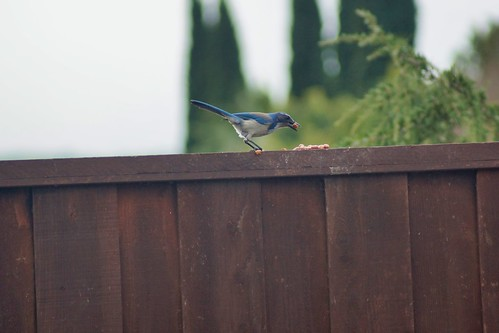 2019-01-20 - Nature Photography - Our Backyard Friends