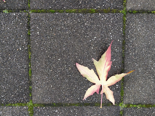 Maple leaf on the sea wall