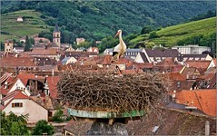 Ribeauvillé ( Alsace)