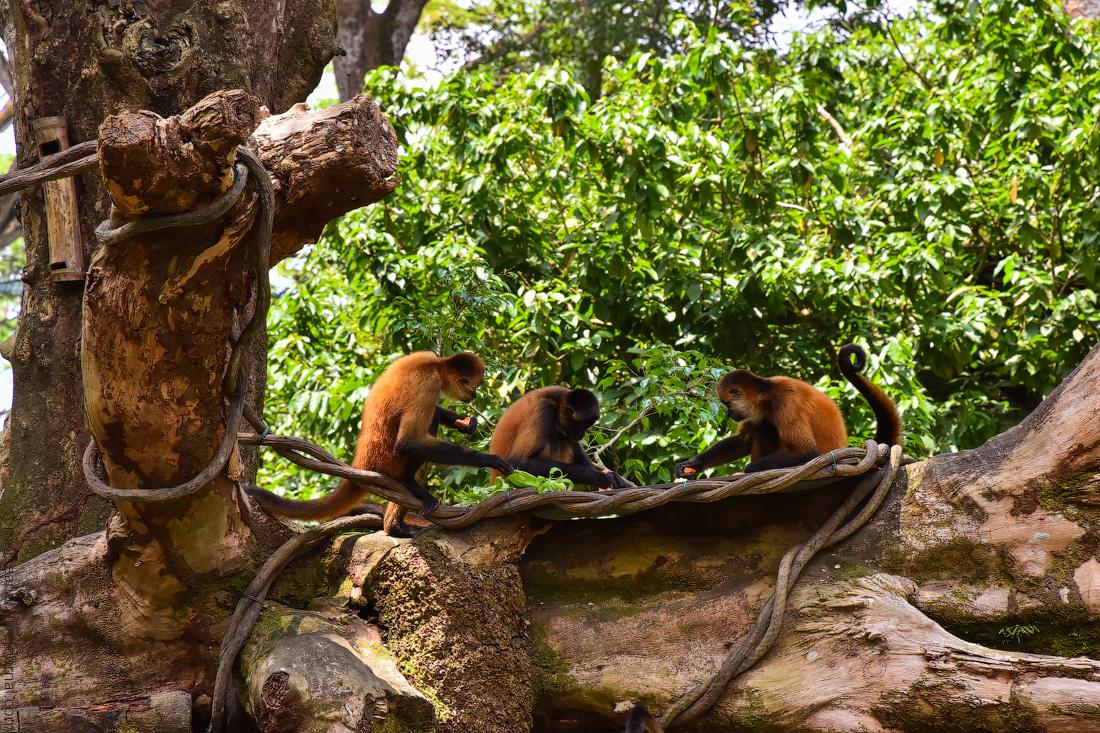 Singapore-zoo-(44)